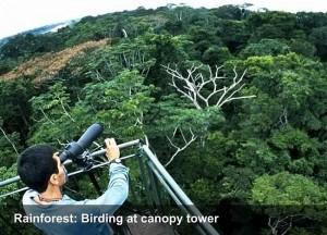 faceperu-birding-at-canopy-tower-opt